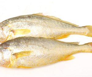 黃花魚(冰鮮)
