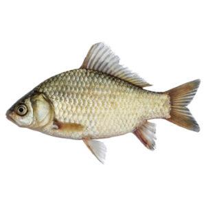 白側魚 ( NEW )