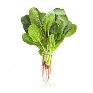 有機菠菜苗