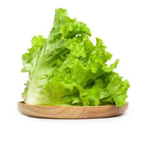 有機綠羅莎生菜 ( NEW )